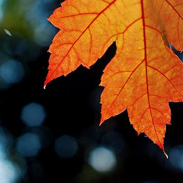 fall-leaf_sm 5 Fall Marketing Efforts for Winter Rewards